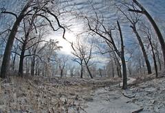 Naked trees, ice, sun (debunix) Tags: park storm ice saint forest louis december 2006 fisheye