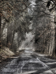 Country lane (Stevacek) Tags: road morning autumn trees light fall les forest d50 countryside nikon hill lane czechrepublic priroda hdr ceskarepublika rano podzim cesta czechparadise stromy ceskyraj bohemianparadise tthdr venkov vrch stevacek cesticka dopoledne jitro