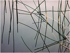 playing around with lines, dhakwada (nevil zaveri (thank you for 10million+ views :)) Tags: india abstract reflection nature water grass lines reeds photography photo blog pond poetry poem pattern photographer photos geometry patterns stock lakes images poetic photographs photograph designs geometrical zaveri waterplants stockimages nevil navsari billimora dhakwada nevilzaveri