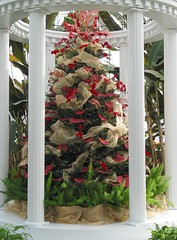 Merry Christmas at Phipps