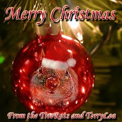 MERRY CHRISTMAS (Terry_Lea) Tags: christmas interestingness squirrel squirrels ornament treerats tbas