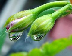 drip drop by rain