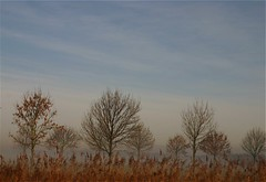 Big Trees, Small Trees ... (Berta...) Tags: trees sky fog berta twiske