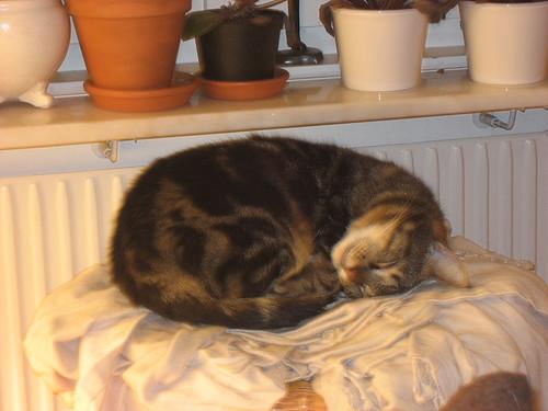21:21 - Morris sover och drömmer så det rycker i morrhåren