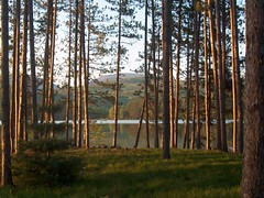 Sun on Trees (virginiakolstad) Tags: bestnaturetnc06
