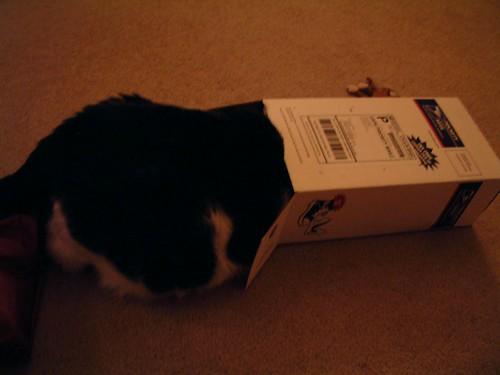 Eva loves the Box