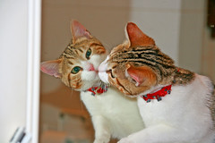 That's Amore? (mac_teo) Tags: friends italy portraits canon mirror kiss gatto gatti bacio specchio macusers gggmirror