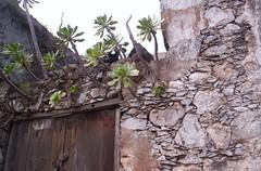 Watching You! (secrettenerife.co.uk) Tags: españa cat geotagged spain tenerife canaryislands islascanarias palmar verode geo:lat=28344654 geo:lon=16845957