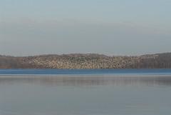 Geese Lenticular 1405 (danaman) Tags: snowgeese merrillcreekreservoir