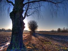 Two generations (Krogen) Tags: nature norway landscape norge natur norwegen olympus c7070 noruega scandinavia akershus romerike krogen landskap noorwegen noreg ullensaker skandinavia hovin photomatix