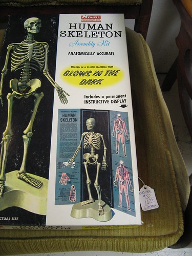Anatomically correct! Glows in the dark! Who knew human bones glowed in the dark?