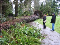 "stanley park mess • <a style=""font-size:0.8em;"" href=""http://www.flickr.com/photos/70272381@N00/343521868/"" target=""_blank"">View on Flickr</a>"