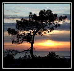 Moment of calm (chri_sti_an) Tags: ocean sunset tree spain galicia zen