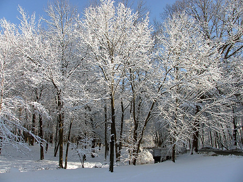 January Snow Trees