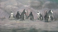"name the penguins • <a style=""font-size:0.8em;"" href=""http://www.flickr.com/photos/70272381@N00/349964482/"" target=""_blank"">View on Flickr</a>"