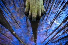 Abyss (nailbender) Tags: reflection tree water ilovenature bravo 500v20f alabama swamp nailbender specnature abigfave isawyoufirst joewheelerwildliferefuge diamondclassphotographer flickrdiamond jdmckinnon