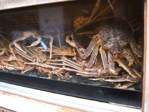 Crabes maltraités