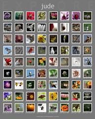 my little 'flickr trifecta' ... (jude) Tags: pictures flickr scout mimbrava jude judith 2007 meskill judithmeskill noahbulgaria flickstrs judeonflickr