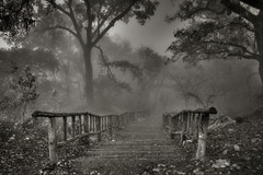 Come with Us... (CarlosBravo) Tags: people mist cold fog mexico mood interestingness1 eerie nuevoleon horror terror downstairs niebla miedo hdr sanpedro chipinque silenthill megatopofthefog