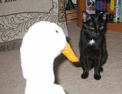 Daryl and Parsnip (Mr. Ducke) Tags: cat duck daryl parsnip tunafished