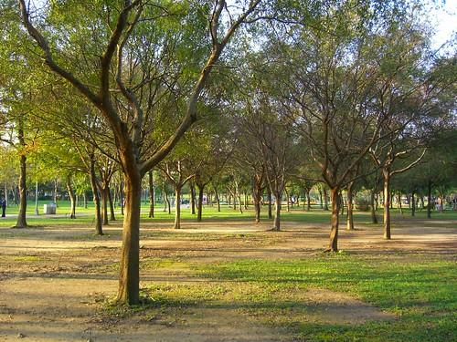 冬天的大安森林公園