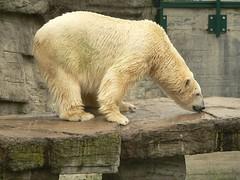 ;-)) (Dzwjedziak) Tags: vienna geotagged lumix zoo december 2006 animalkingdomelite dzwjedziak aplusphoto pdpnw schnbrunnszoo geo:lat=48181636 geo:lon=16303904