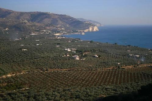 Olives, olives everywhere