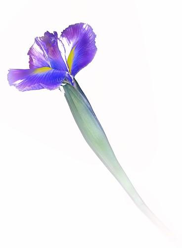 Iris Scan 2