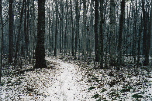 Snowy trail winding through blue forests