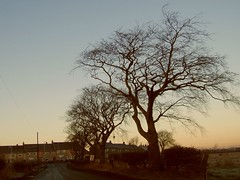 the tree by the road (Lidwit) Tags: morning tree sunrise geotagged dawn scotland early north daybreak cleland lanarkshire