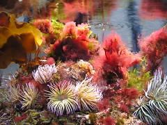 Parlour aquarium (lemur steamer) Tags: aquarium underwater naturalhistory hornimanmuseum