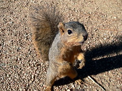 The Hungry Squirrel (J-a-x) Tags: park usa animal closeup happy squirrel funny texas houston gimme hungry creature hermannpark