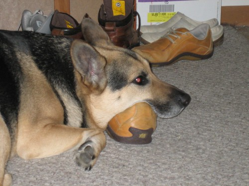 Ginga sleeps on a shoe