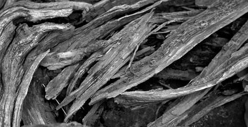 Flow of Wood