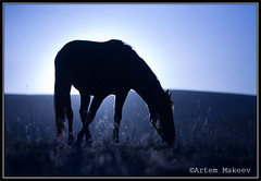 """"""" """" (White Bear) Tags: horses horse animal animals canon eos russia 5d equestrian equine ussr   russianfederation    kislovodsk   mywinners   wowiekazowie"""