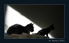 2 Cats (Rachid HAKKA) Tags: cats cat chats chat abigfave byrachidhakka