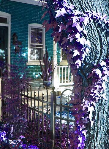 A Wonderland House!