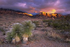 Dripping Springs Sunset (BenParker) Tags: new las mountains mexico organ cruces yucca colorphotoaward superbmasterpiece diamondclassphotographer flickrdiamond