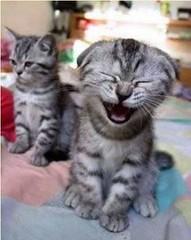 Laugh Often