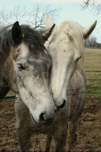 Cuddling Horses