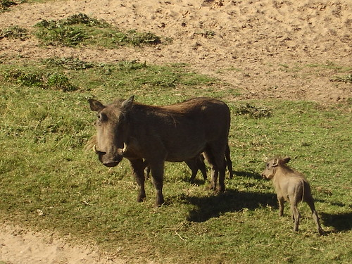 Sydafrika 2007 079