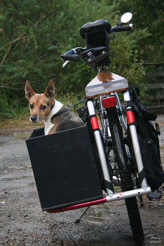 The Xtracycle Dogbox