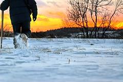 Winter ('Bobesh) Tags: trees winter snow tree nature abigfave