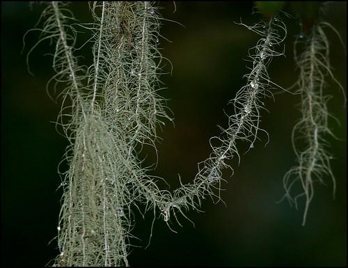 moss in rain