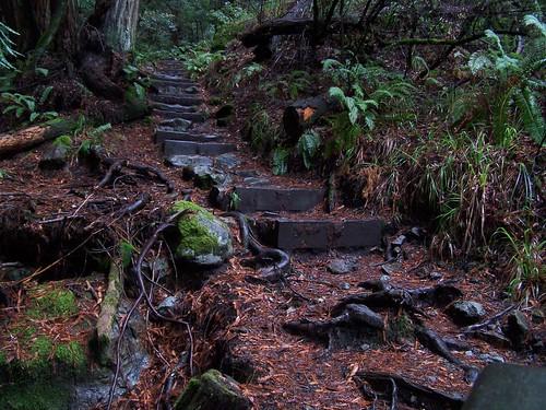 20061209 Muir Woods