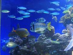 Eilat coral reef (yoel_tw) Tags: coral אילת reef eilat coralreef ריף אלמוגים underseaobservatory