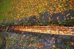 like the synapse (takmagar) Tags: autumn winter red color fall leaves temple japanese shrine autumnleaves trench shiga hiyoshi hiei hieizan enryakuji ishiyama ohtsu