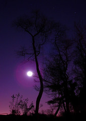 Violet Dreams (Furryscaly) Tags: longexposure nightphotography blue trees winter shadow sky moon color tree nature colors silhouette backlight night yard speed dark stars outdoors md backyard long exposure pretty december shine nocturnal purple suburban branches suburbia violet deep vivid maryland columbia eerie creepy nighttime midnight shutter flare dreamy suburbs serene nightsky backlit tradition silhouetted afterdark backlighting dreamscape prettysky darkblue shutterspeed lightpollution slowshutterspeed lowshutterspeed columbiamd aftersunset midnightblue silhouettetree thesilhouettetree