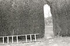 Winter Garden (Eimaje) Tags: door white black art modern garden fine photograph hedge ladder blanc negre