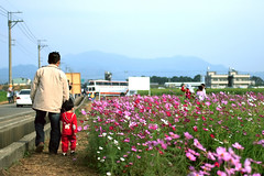 A Sea of Cosmos-Flowers  (*Yueh-Hua 2016) Tags: flowers people plant canon eos taiwan dslr   cosmos 30d   canoneos30d taichungcounty canonef35mmf20 horizontalphotograph 2006december   xinsheshiang